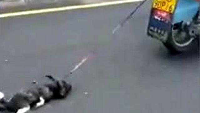Köpeği motoruna bağlayıp yol boyunca sürükledi