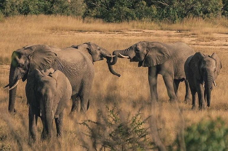 Dünyada vahşi yaşam popülasyonu 46 yılda ortalama yüzde 68 düştü