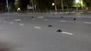 Rusya'da gökten yağan kuş cesetleri halkta paniğe neden oldu