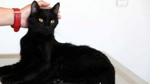 Hollanda'da kaybolan kedi 2 yıl sonra Belçika'da bulundu