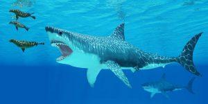 Megalodon köpekbalığının gerçek boyutları ilk kez ortaya çıktı