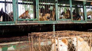 Güney Kore'de 200 köpeğin tutulduğu yeni bir köpek eti pazarı tespit edildi