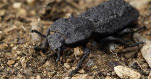 Şeytani zırhlı böceği arabayla ezdiler sonuçlar şaşırttı