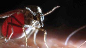 Adana'da 'kör eden' sinek tehlikesi