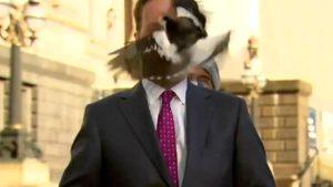 Yayına hazırlanan muhabirin yüzüne kuş çarptı