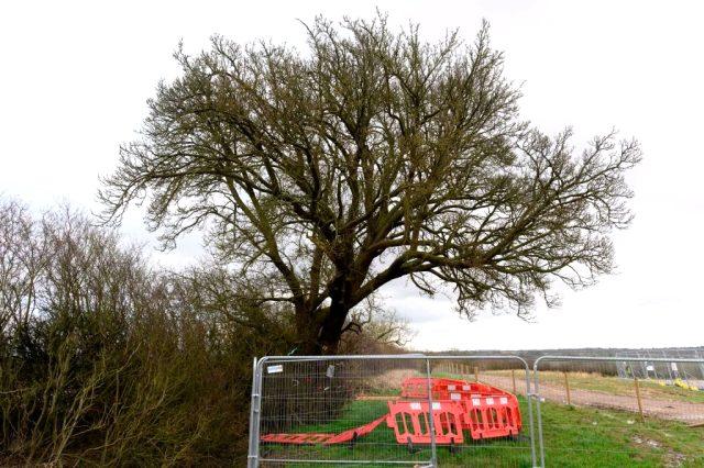 İngiltere'de 250 yıllık armut ağacı tren yolu yapımı için kesildi