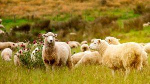 Koronavirüse yakalanma riskine açık 26 hayvan türü, 'insanlara hastalık geçirebilir'