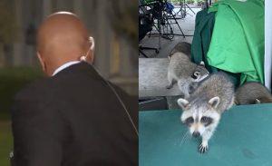 Beyaz Saray'da rakunlarla mücadele sürüyor! Muhabir ne yapacağını şaşırdı