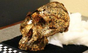 Güney Afrika'da 2 milyon yıllık insansı kafatası bulundu