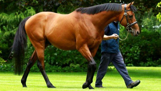 İngiliz yarış atı Galileo, 190 milyon euroluk değeriyle Ronaldo ve Messi'yi geçti