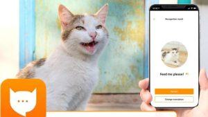 MeowTalk: Kedilerin miyavlamalarını tercüme eden uygulama