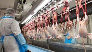 Singapur, laboratuvarda üretilen 'tavuk etinin' satışına onay verdi