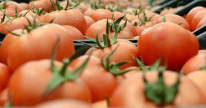 Rusya, Azerbaycan'dan domates ithalatını yasaklıyor