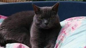 Altı yıl önce kaybolan kedi, ilginç bir şekilde bulundu