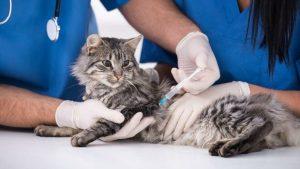 Uzmanlardan uyarı: Evcil hayvanlara da aşı yapılmalı