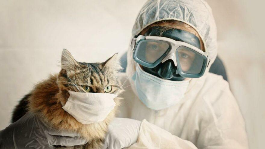 Kedinin korona testi pozitif çıktı