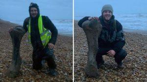 İngiltere'de 125 bin yıl öncesine ait fil fosili bulundu