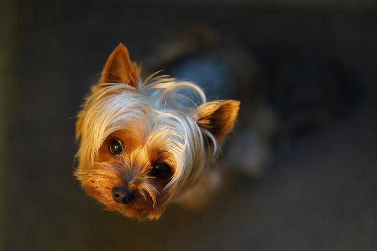 Hortumun uçurduğu köpek, eve dönmeyi başardı