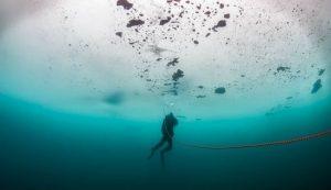 Antarktika'da 900 metre derinde yeni yaşam formu keşfedildi