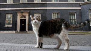 Downing Sokağı 10 numaranın ünlü kedisi Larry, 2 başbakan eskitti