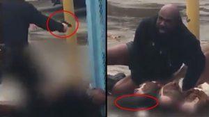 ABD'de 3 pitbull dehşet saçtı