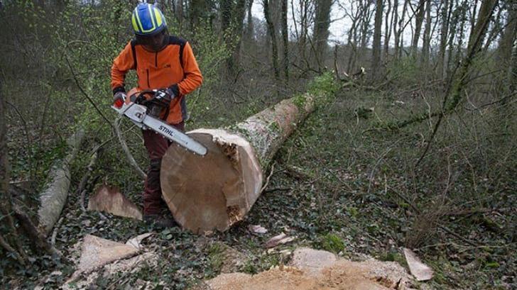 200 yıllık ağaçları kestiler ülke ayağa kalktı
