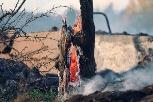 İspanya'da gönüllü itfaiyeci, 1,4 kilometrekare ormanlık alanı 'egosu için' yaktı