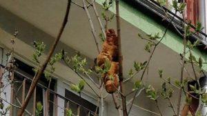 Ağaçta 'iguana' var zannettiler