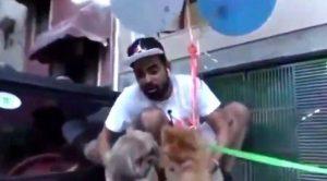 Köpeğine balon bağlayıp uçurdu