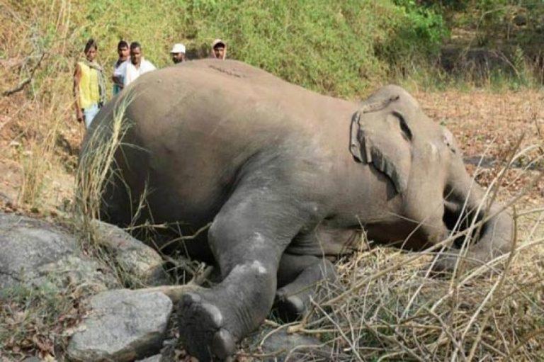 8 fil ölü bulundu