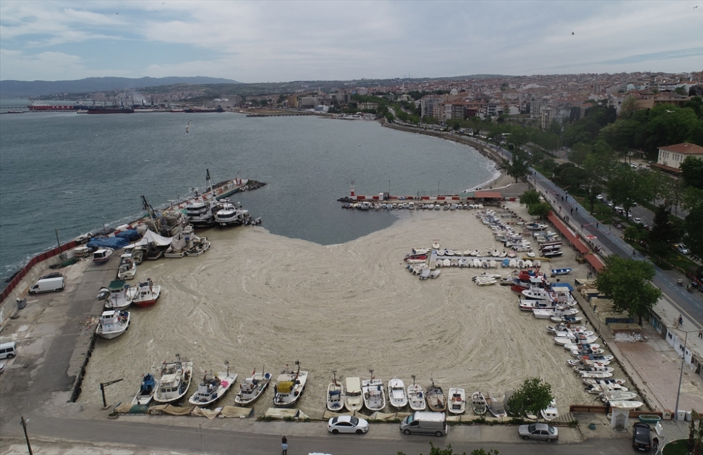 Turkey sets out plan for largest outbreak of 'sea snot' on record