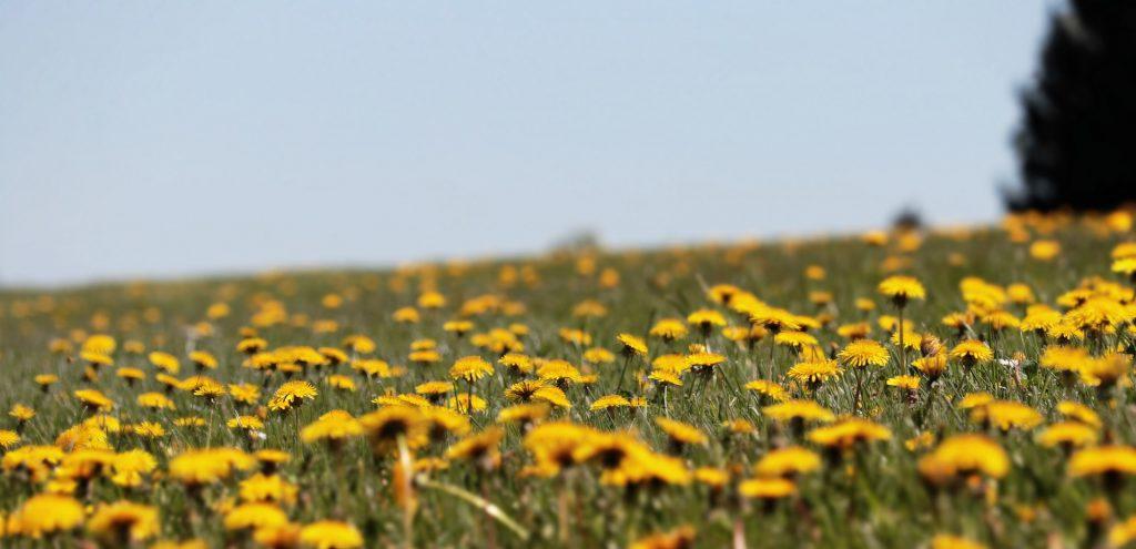 Concerns over proposed development on Enfield's green belt