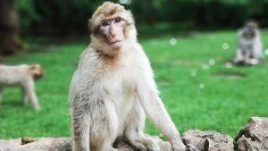 """Çin'de """"Monkey B"""" virüsü nedeniyle ilk ölüm"""