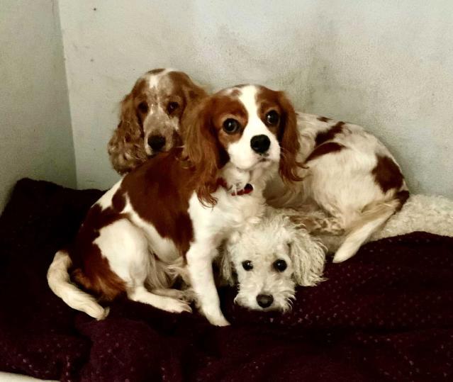 Galler'de yaklaşık 200 köpek yasa dışı olduğu iddia edilen köpek çiftliğinden kurtarıldı