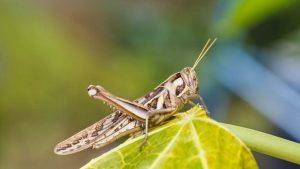 Yenilebilir böcekler yakında marketlerde satışa sunulacak